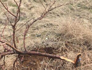 17 bin TL değerindeki ağaçlarını keseni fotokapanla yakaladı