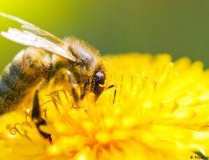 2021 arı fiyatları belli oldu