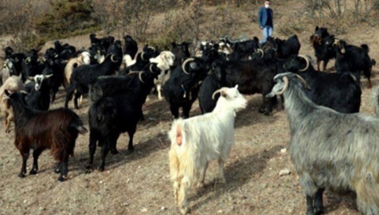 engelli genç devlet desteğiyle keçi sürüsü sahibi oldu