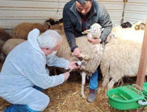 Hayvan çiftliği karantinaya alındı