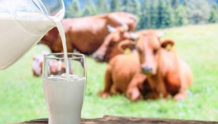 inek sütü miktarı yüzde 1,2 arttı