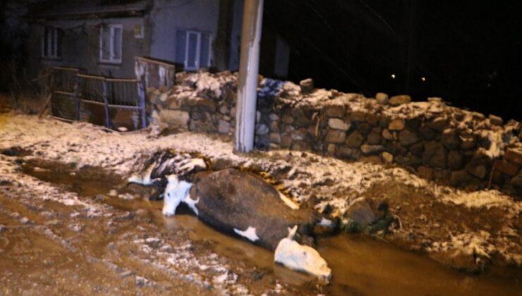inekler yüksek gerilime kapıldı