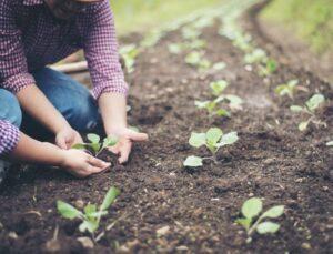 sigortalı çiftçi sayısı son 10 yılda yüzde 50 geriledi