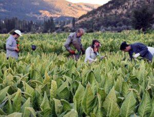 tütün kırsal kalkınma desteği kapsamına alındı