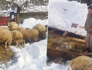 ağıl çöktü koyunlar telef oldu