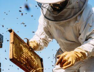 arıcılık ve ipekböcekçiliğine destek