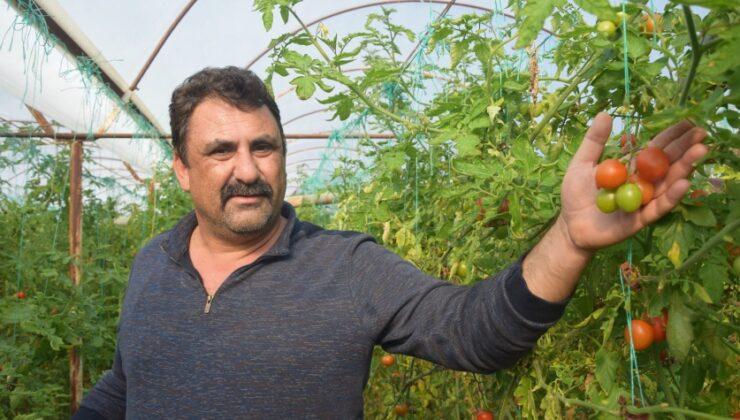 çiftçi: emeği biz veriyoruz, parayı aracılar kazanıyor