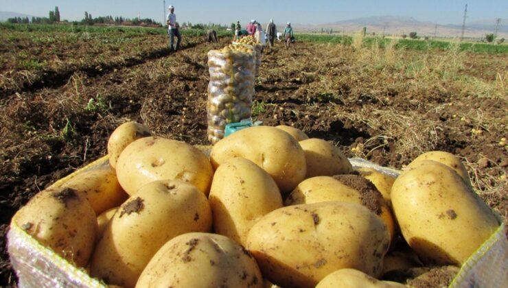 belediyeler üreticiden patates alacak