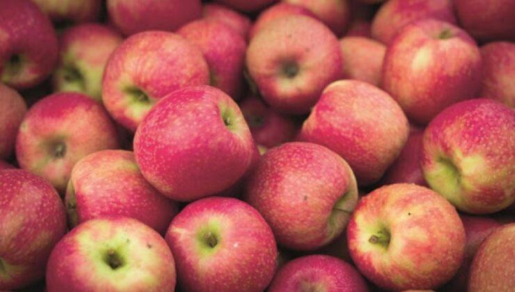 elma üreticileri zor durumda
