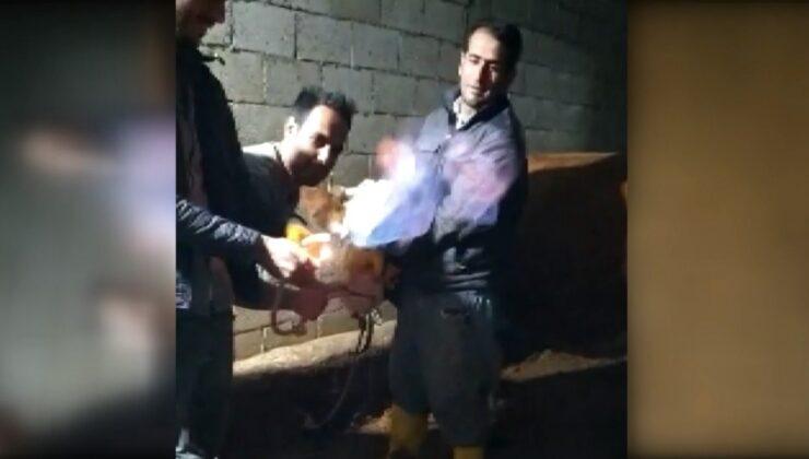ineğin midesindeki metan gazı yakıldı