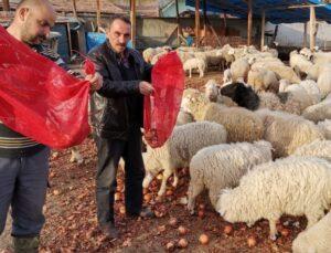Soğan satılamayınca hayvanlara yem oldu