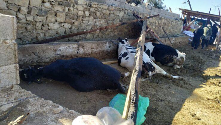 fırtına ahırı yıktı, 3 inek telef oldu
