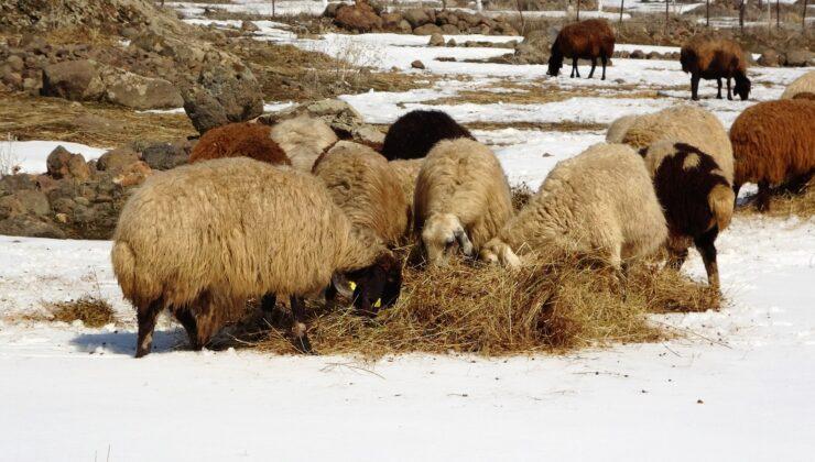 besicilerin zorlu kış mesaisi uzadı