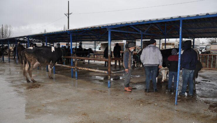 canlı hayvan pazarı tekrar açıldı