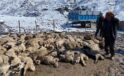 İzdiham çıktı, 80 kuzu ve 2 koyun telef oldu