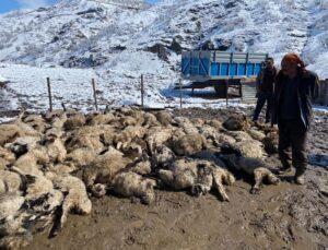 izdiham çıktı, 80 kuzu ve 2 koyun telef oldu