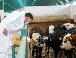 eskişehir'den azerbaycan'a canlı hayvan ihracatı