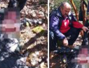 kurtlar sürüye saldırdı 6 keçiyi parçalayarak telef etti