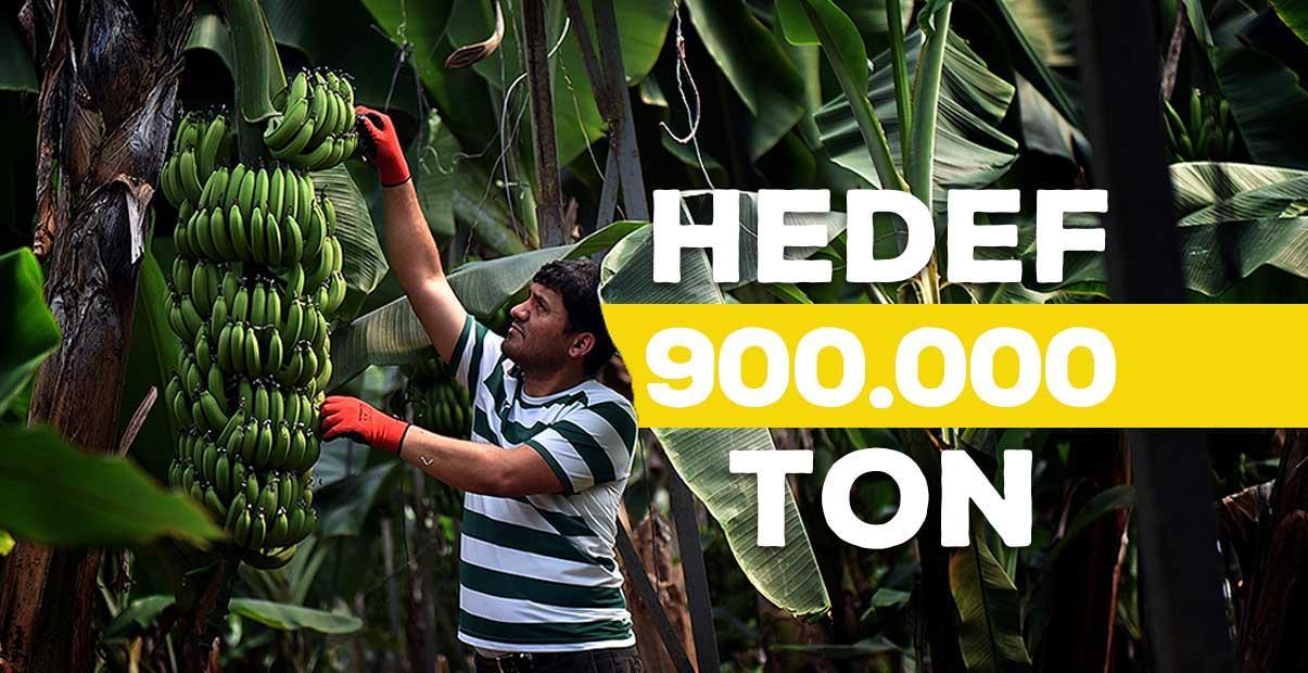 Bu yıl hedef 900 bin ton yerli muz
