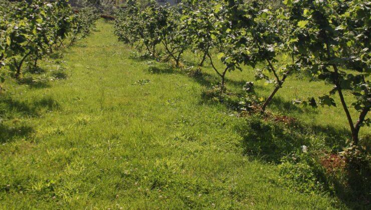 fındık üreticilerine azotlu gübre uyarısı