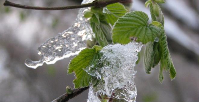 zirai don sonrası fındıkta rekolte düşüşü bekleniyor