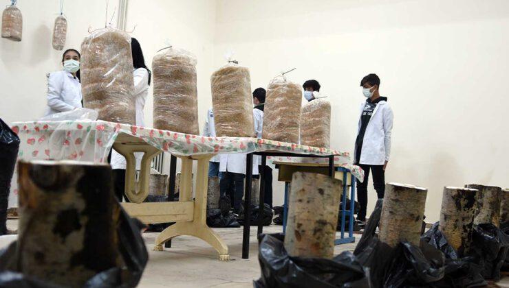 öğrenciler okulun bodrumunda mantar yetiştiriyor