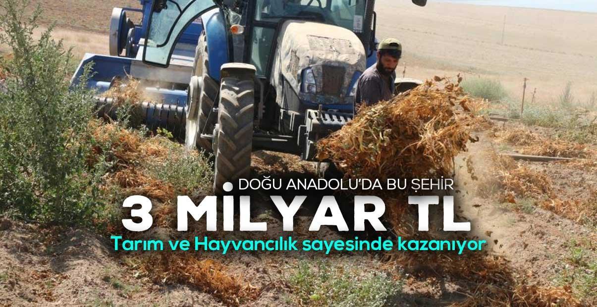 Hayvancılık sektörü 2020 yılında Bitlis'e 3 milyar TL kazandırdı