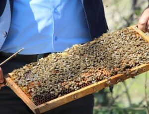 arılar çiçekle buluştu, yetiştiriciyi ilaçlama korkusu sardı