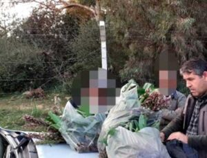 izinsiz toplanan 346 orkideye 160 bin tl ceza