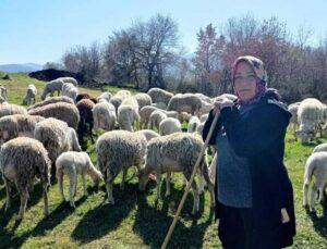 kadın çoban 170 hayvanlık sürüye bakıyor