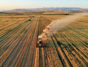 Türkiye'de bitkisel üretim değeri 97,37 milyar lira oldu