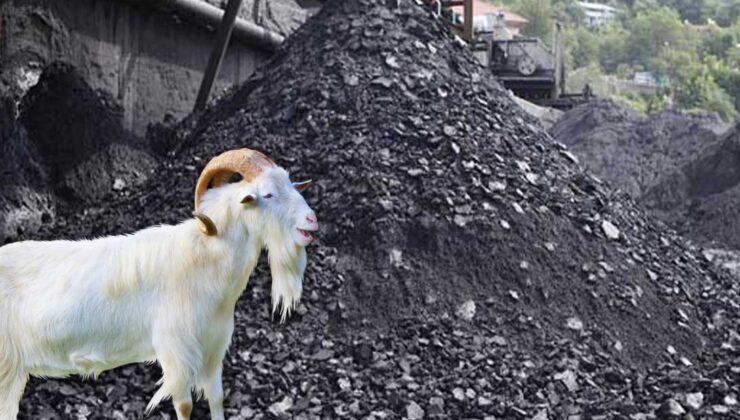 demir madeni atıkları keçileri zehirledi iddiası
