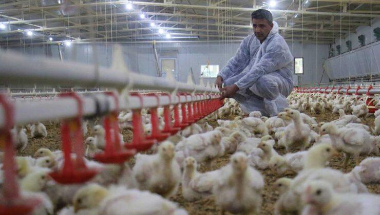 devlet desteği ile kurduğu çiftlikten yılda 300 bin tl kazanıyor