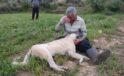 Öldürülen çoban köpeğinin başında gözyaşlarına boğuldu