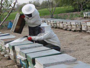 arılar zehirli kimyasal atık su yüzünden telef oldu