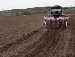 karabük'te atıl durumdaki 350 dekar tarım arazisine ayçiçeği ekildi