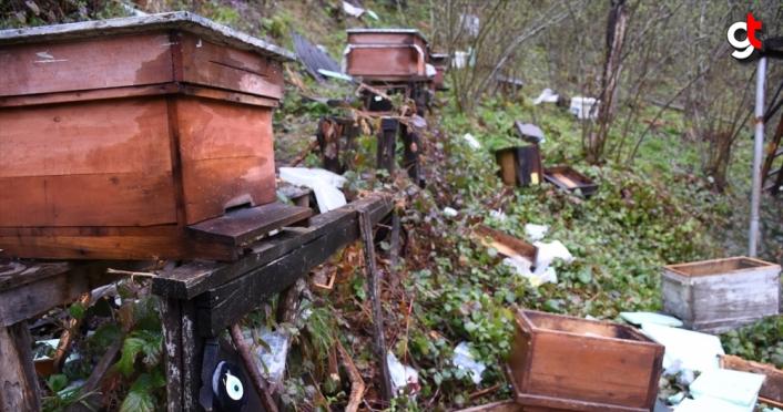 aç kalan ayılar arı kovanlarına saldırdı