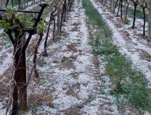 tarım arazilerini dolu vurdu