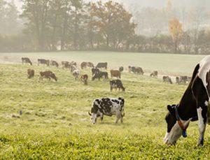 pandemiye rağmen tarım ve hayvancılık sektörüne hizmet etmeye devam ettiler