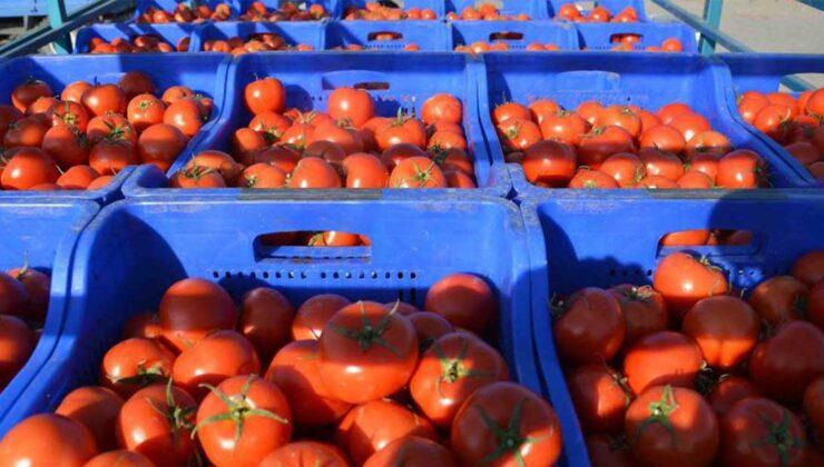 domates üreticisi kotanın kaldırılmasını istiyor