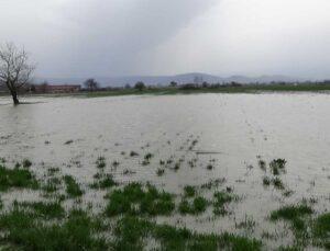 hayvan çiftliği sular altında kaldı, kuzular kepçeyle kurtarıldı
