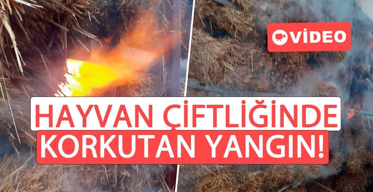 Hayvan çiftliğinde korkutan yangın