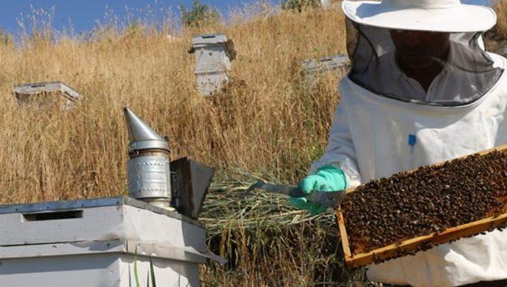 doğuya giden arıcılar kuraklıktan olumsuz etkilendi