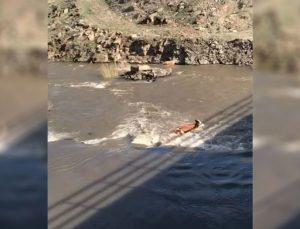 hayvanların azgın sularda sürüklenmesi kameralara yansıdı