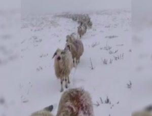 kar yağışını sosyal medya hesabından paylaşan vatandaşın takipçileri ile diyaloğu güldürdü
