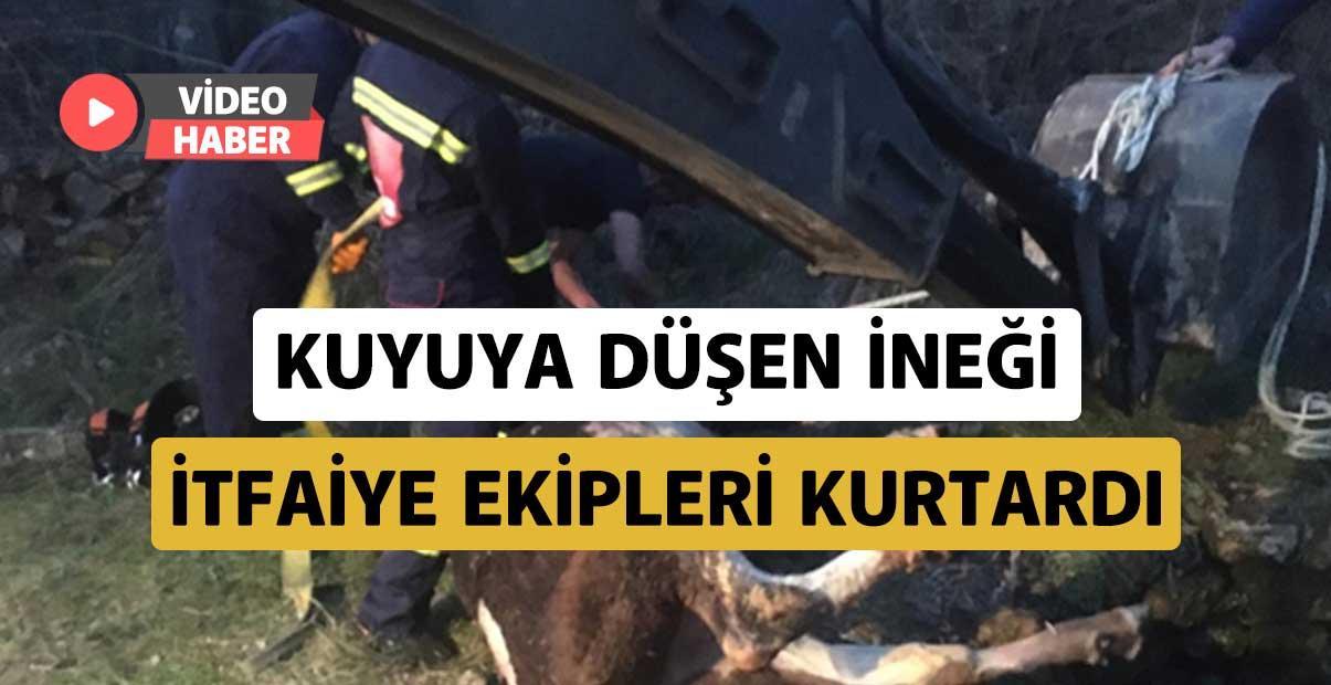 Kuyuya düşen ineği itfaiye ekipleri kurtardı