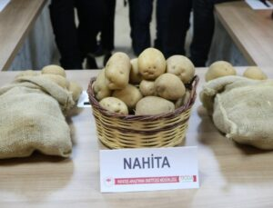 "yerli patates çeşidi ""nahita"" avrupa yolunda"