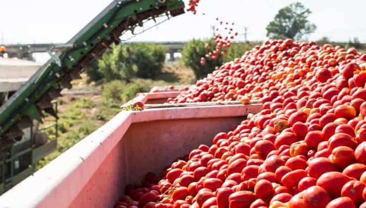 rusya domates ithalat kotasını artırmaya hazırlanıyor