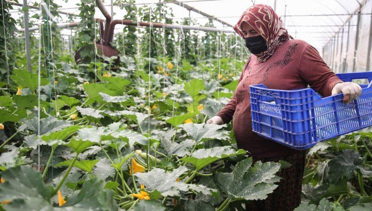 tarım işçisi kadınlar seralarda üretime aralıksız katkı sağlıyor