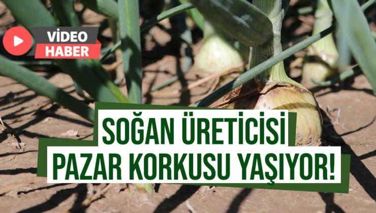 soğan hasadı başladı üretici pazar bulamama korkusu sardı